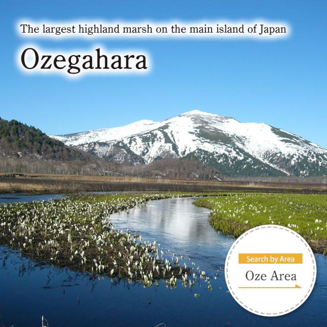 Ozegahara in Oze National Park