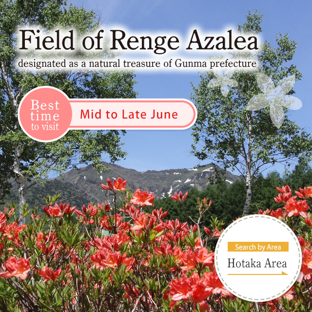 Field of Renge Azalea (designated as a natural treasure of Gunma prefecture)