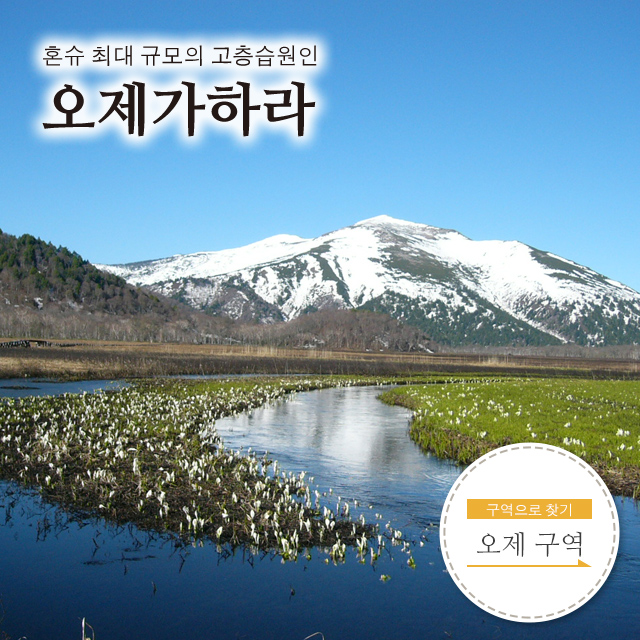 오제 국립공원 오제가하라